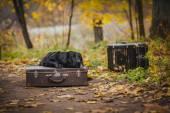 Svart labrador hösten i naturen, vintage — Stockfoto