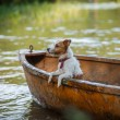 Dog playing in water — Stock Photo #67173035