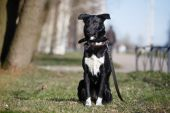 Mixed breed dog in nature  — Stock Photo