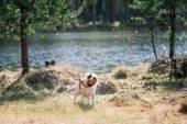 Jack Russell Terrier pies gry w wodzie — Zdjęcie stockowe