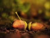 Acorn on the ground, autumn concept — Stock Photo