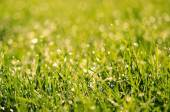 Closeup photo of grass field  — Stockfoto