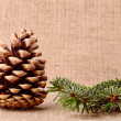 Pine cone and branch on sackcloth background — Stock Photo #55466091