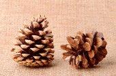 Pine cone on sackcloth background — Stockfoto