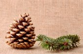 Pine cone and branch on sackcloth background — Stockfoto