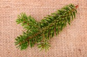 Pine branch on sackcloth — Stockfoto