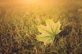 Vintage photo of autumn leaf on field at sunset — Stock Photo