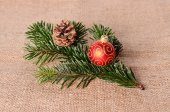Fir branch on sackcloth background — Stock Photo