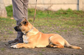 Dog with owner in the park — Stock Photo
