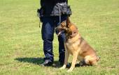 K9 police officer with his dog in training — Stock Photo