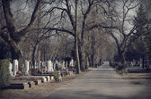 Pathway in the cemetery — Stock Photo