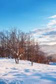 Snowy landscape at winter season — Stock Photo