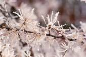 Beautiful plant covered with snowflakes at winter seasone — Stock Photo