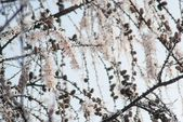 Beautiful plant covered with snowflakes at winter seasone — ストック写真