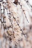 Beautiful plant covered with snowflakes at winter seasone — Foto de Stock