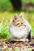 Little kitten sitting on the grass — Stock Photo