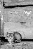 座っている小さな子猫 — ストック写真