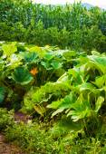 Bel prato verde — Foto Stock