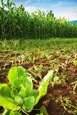美しい緑の牧草地 — ストック写真