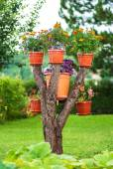 Amazing homemade flower tree — Stock Photo