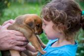 Little girl with a puppy in her arms — Stock Photo