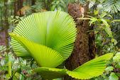 Borneo rainforest — Stock Photo