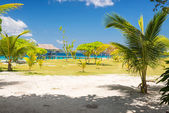 Tropical colors — Stock Photo