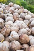 Heap of ripe coconut — Stock Photo