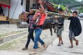 Traditional funeral in Tana Toraja — Stock Photo
