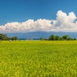Indonesian rice fields landscape — Stock Photo #59309057