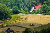 Idyllic traditional Toraja village — Stock Photo