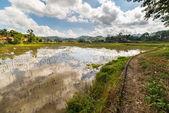 Toraja landscape, rice paddies — Stock Photo