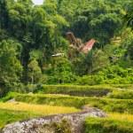 Idyllic landscape in Tana Toraja — Stock Photo #63328077
