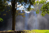 Whangarei waterfall — Stock Photo