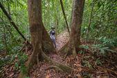 Треккинг в тропические леса Борнео — Стоковое фото