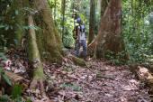 Trekking in Borneo rainforest — Stock Photo