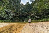 Piscina natural de la selva — Foto de Stock