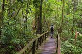 ボルネオの熱帯雨林を探索 — ストック写真