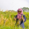 Rural life and farmland in Indonesia — Stock Photo #70508969