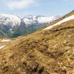 Постер, плакат: Alpine flowers and landscape in springtime