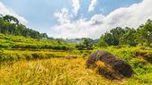 Terraced rice paddies from below — Stock fotografie