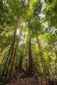 Majestic Borneo rainforest from below — Stock Photo