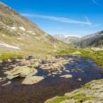 High altitude alpine stream in summertime — Stock Photo #76721237