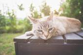Cat lying on a wooden bench in backlight — Stock Photo