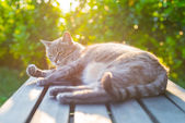 Cat lying on bench in backlight at sunset — Stock Photo