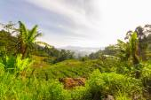 Landscape in the Hill Country of Sri Lanka — Stock Photo