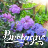 Brittany summer background with hand-drawn calligraphy sign — 图库矢量图片