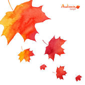 Watercolor painted orange maple leaves fall — Stock Vector