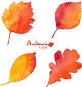 Autumn watercolor vector foliage set — Stock vektor