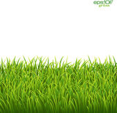 Green isolated grass on white background — Stock Vector